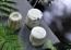 Grön Lycka Ekologiskt Lershampo - Sunlit Shimmer