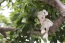 Rubens barn, EcoBuds - Daisy