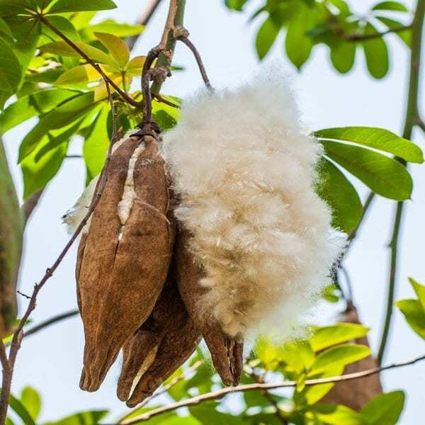 Cocoon Company 1 kg kapok i lösvikt ekologisk stoppning